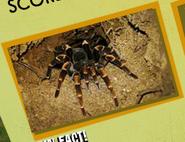 Tarantula Image 2