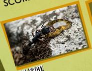 Ant Image 4