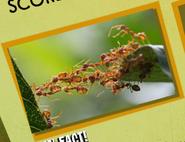 Ant Image 3