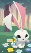 Updated Spring Bunny