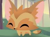 Pet Fennec Fox