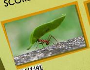 Ant Image 5