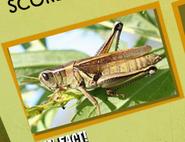 Grasshoper Image 1