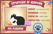 BlackPlatypusAdoption