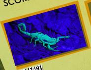 Scorpion Image 2