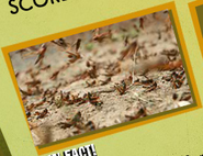 Grasshopper Image 2