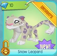 Diamond-Shop Snow-Leopard