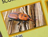 Beetle Image 1