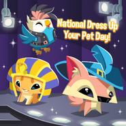 PetStop-DailyExplorer