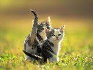 2cats1