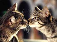 2cats2
