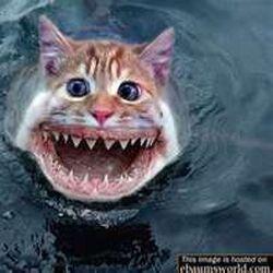 Funny Cat Shark