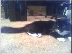 Milo resting.png