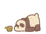 Stray Wild Panda