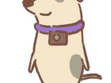Insta-Pup