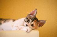 Adorable-animal-cat-1404819