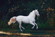 Animal-animal-photography-close-up-1996333