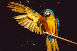 Animal-animal-photography-avian-2317904.jpg
