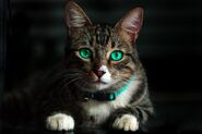 Adorable-animal-blur-617278