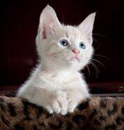 Animal-cat-cute-45201 (1)