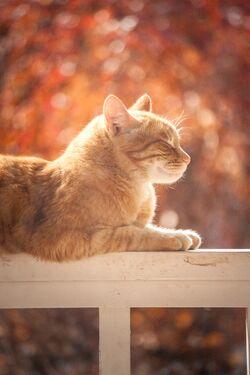 Adorable-animal-cat-804475.jpg