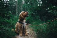 Adorable-animal-canine-1254140