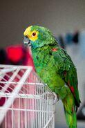 Avian-beak-beautiful-2226006