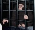 Chimpanzee-hbo-animals