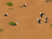 Bald-eagle-wonder-zoo