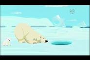 Polar-bear-wild-kratts