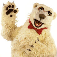 Jake-the-polar-bear