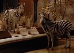 Plains-zebra-night-at-the-museum