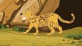 Appu Leopard