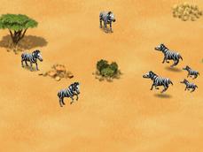 Plains-zebra-wonder-zoo