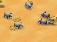 African-elephant-wonder-zoo