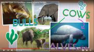 Scishow Kids Manatees and Elephants