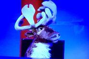 Andrew-the-reindeer