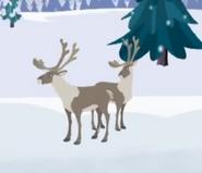 Reindeer-wild-kratts