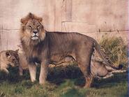 Panthera-leo-roosevelti