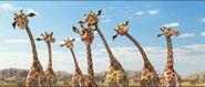 Giraffe-animals-united