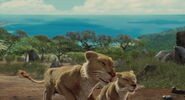 Lion-the-wild