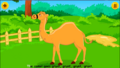 Animal Sounds Song Camel