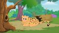 Appu Cheetah
