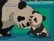Giant-panda-the-wild-thornberrys