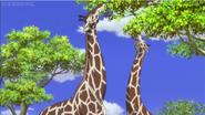 Giraffe-jungle-emperor-leo