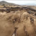 TLK 2019 Wildebeest.png