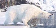 Polar-bear-minions