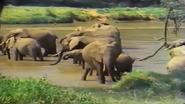 Animal Alphabet with Geofferey Giraffe Elephants