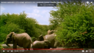Mama Mirabelle's Home Movies ELephants