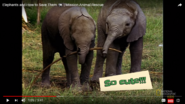 Mission Animal Rescue African Elephants